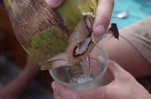 Coconut cocktail aboard the schooner Charlotte, Port Antonio, Jamaica